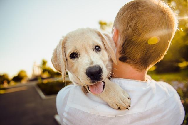 chlapec a šteňa.jpg